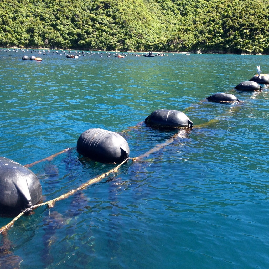 De zuivere wateren waarin de Groenlipmossel kan overleven