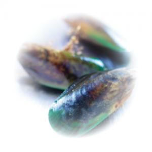 Groenlipmossel-Synofit-samenstelling