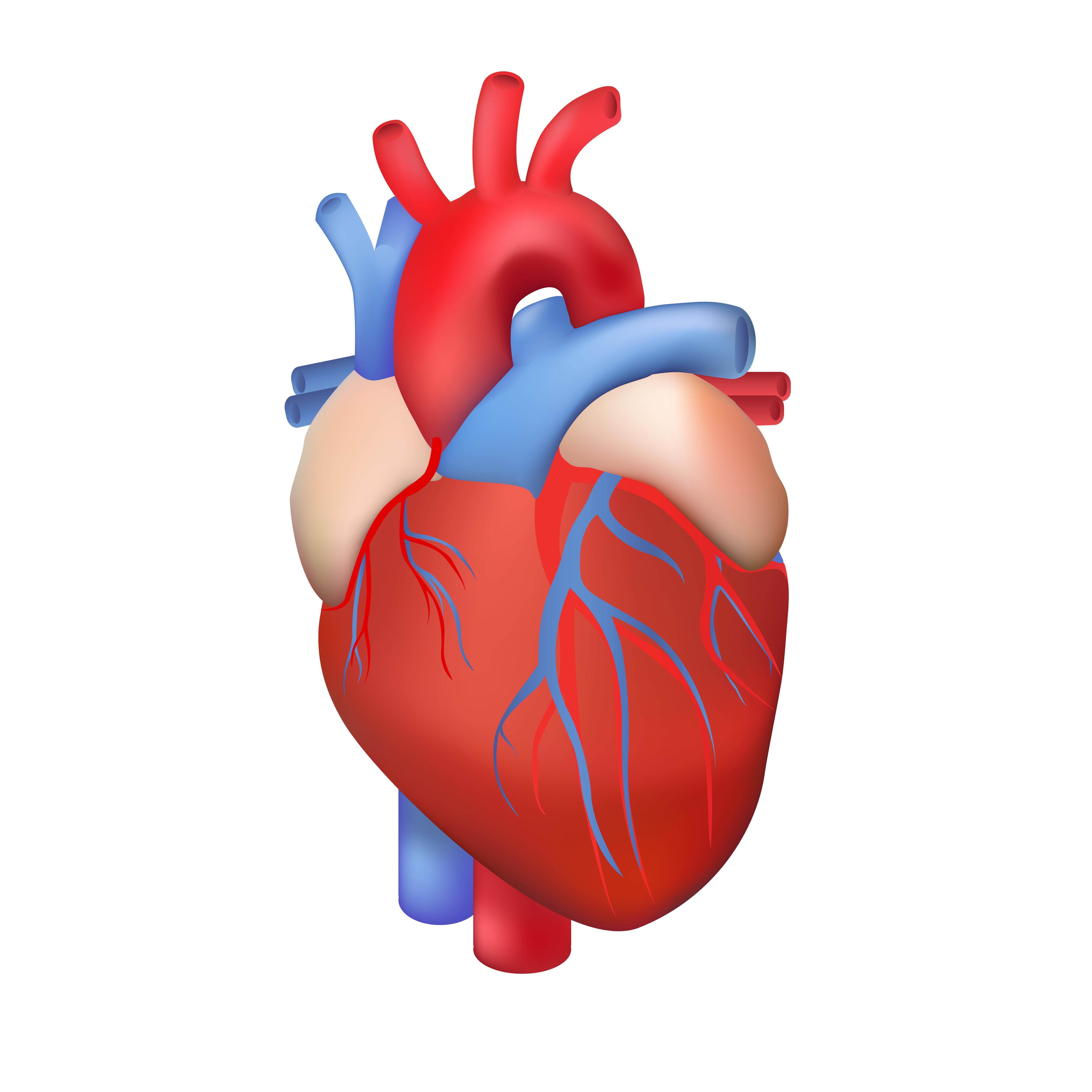 Synocare Cardio